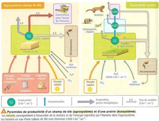 Agroecosysteme2