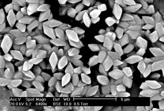 Bt toxin crystals
