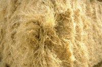 chanvre-fibres.jpg