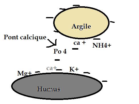 complexe-argilo-humique.png