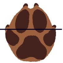 Dessin trace chien2