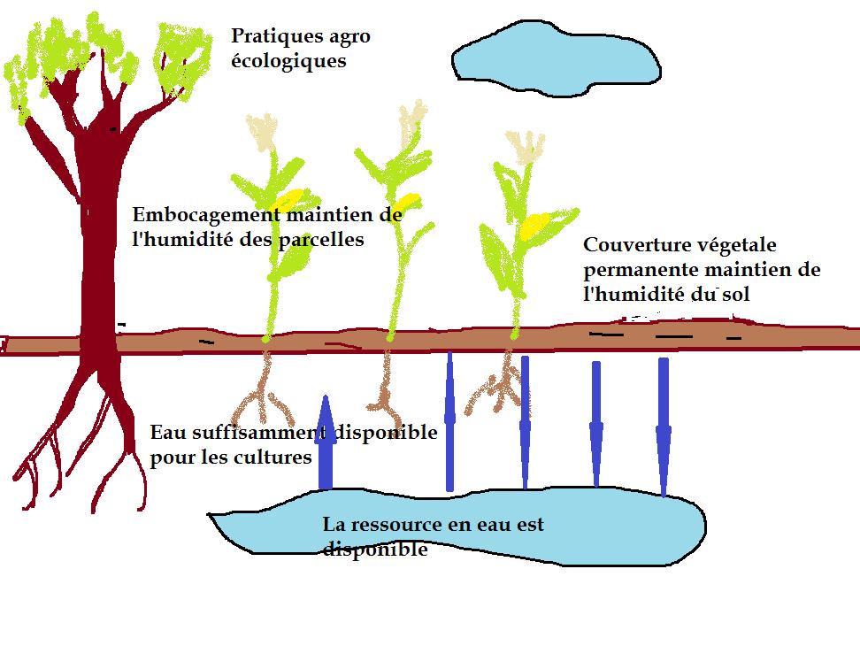 Eau pratiques agroecologiques 1