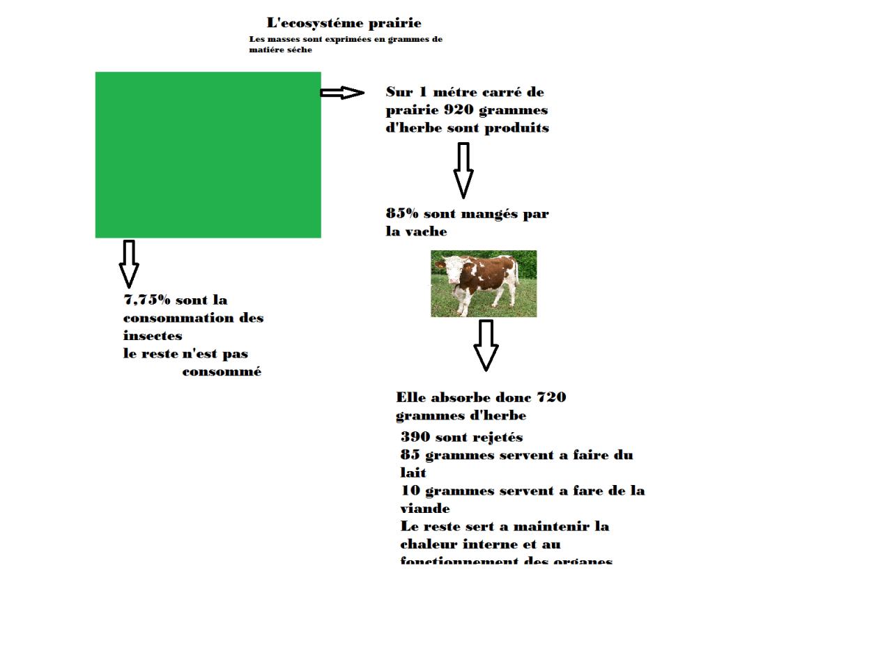 ecosysteme-prairie.png