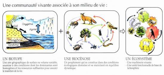 Ecosysteme2