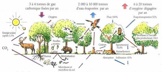 Ecosysteme3